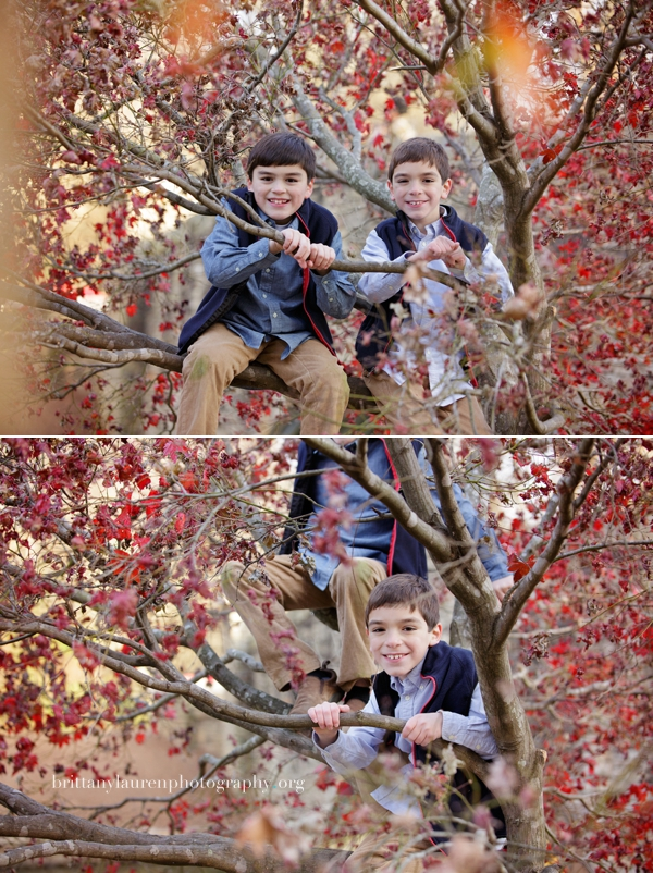 boy pictures in a tree