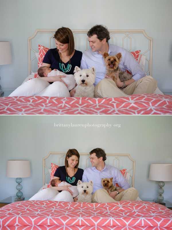 family newborn pictures on bed with dogs