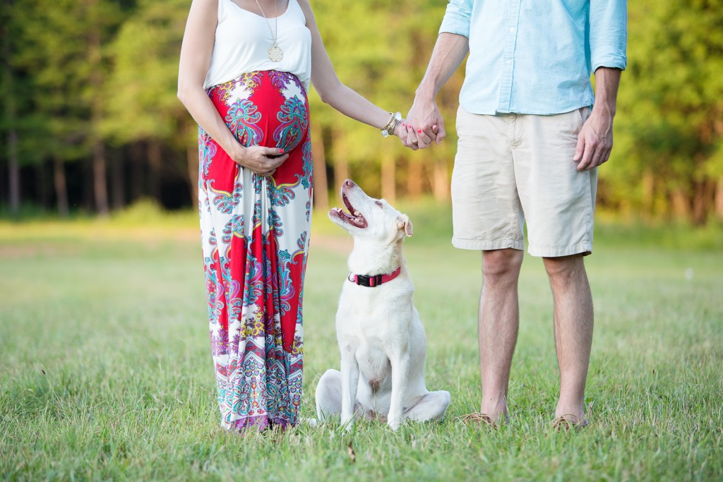 maternity pictures with dog