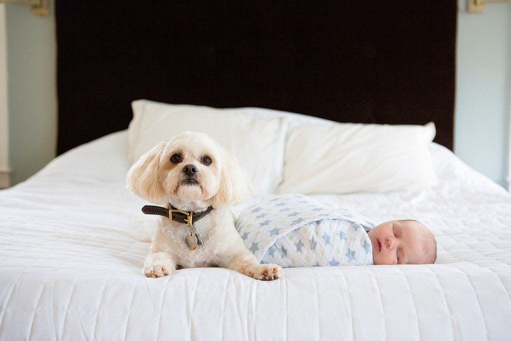 Dog snuggling with baby