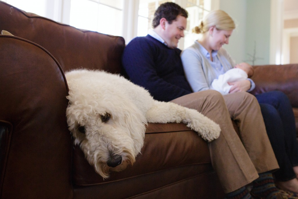 Dog relaxes for newborn pictures