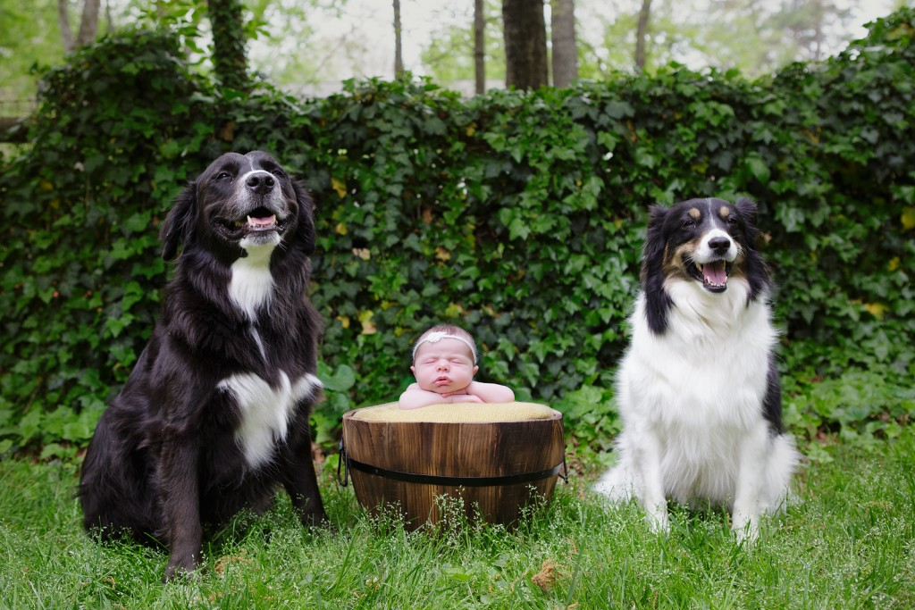 newborn babies and their dogs