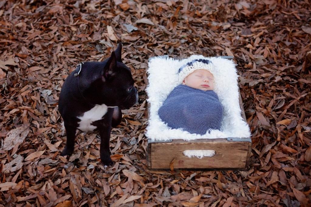 Dog looks at newborn